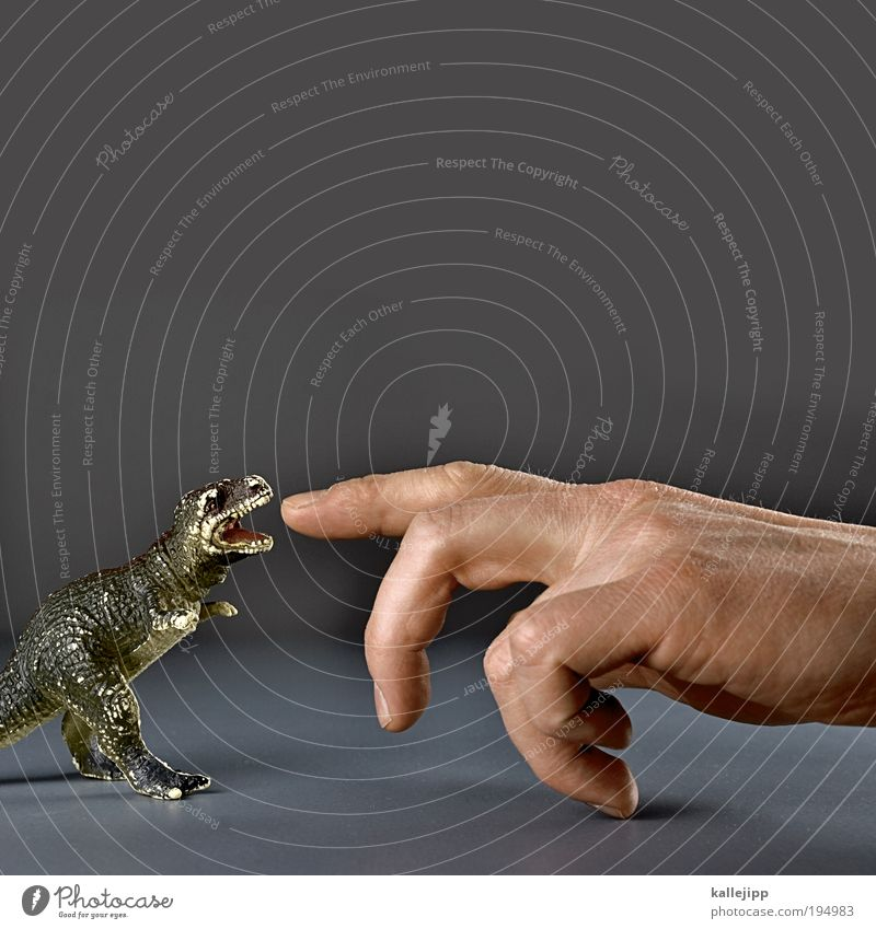 fingerfood Hand Tier Ernährung Spielen Finger bedrohlich Gebiss Spielzeug Vertrauen Wissenschaften Kapitalwirtschaft Zoo Jagd Statue Mensch Risiko