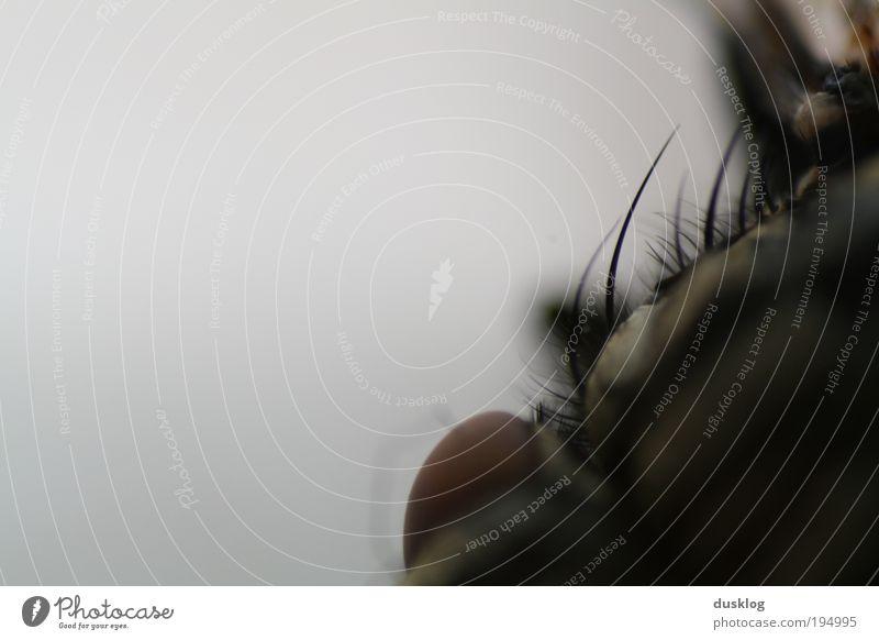 Fly Tier dunkel Angst klein Fliege nah wild außergewöhnlich gruselig Wildtier Ekel Haustier hässlich Insekt