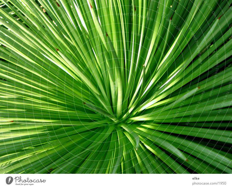 grün und licht grün Pflanze Blatt Botanik Kaktus