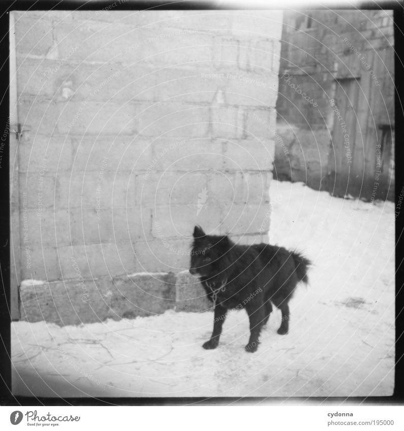 Spitzer Wachhund Hund alt Winter ruhig Leben Wand Freiheit Mauer Zeit Sicherheit Wandel & Veränderung bedrohlich Schutz Vertrauen Idee historisch