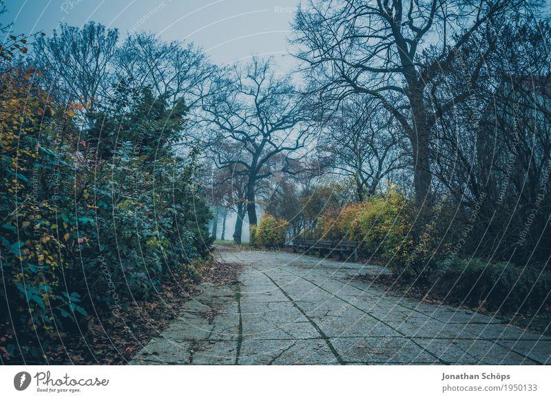 Düsterweg Natur Pflanze blau Baum Landschaft Einsamkeit Winter Umwelt kalt Traurigkeit Herbst Wege & Pfade Tod Park Nebel trist