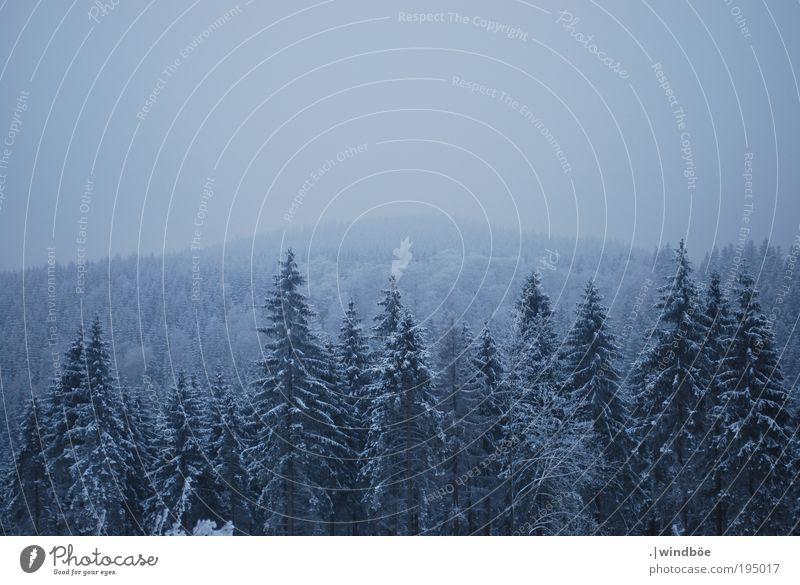 Winteraussichten Himmel Natur blau weiß Baum ruhig Einsamkeit schwarz Wald Erholung kalt Schnee Landschaft Eis natürlich