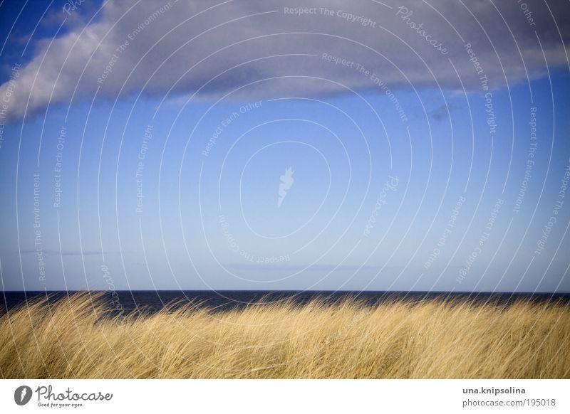 noch meer seh'n Natur Wasser Himmel Sonne Meer Pflanze Sommer Strand Ferien & Urlaub & Reisen ruhig Ferne Leben Erholung Gras Freiheit Wärme