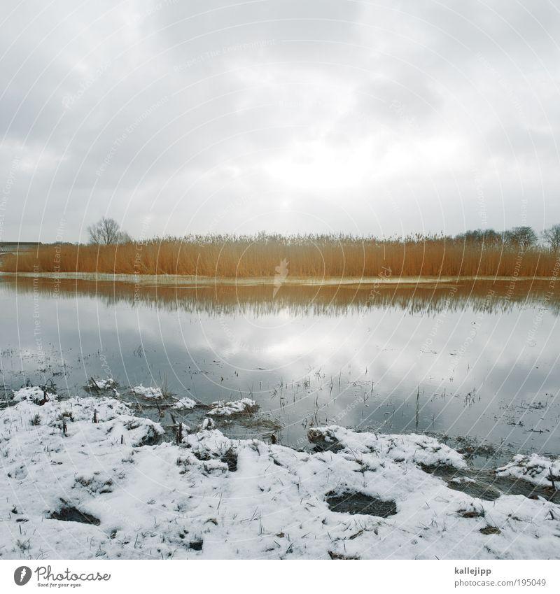 seebühne Umwelt Natur Landschaft Pflanze Tier Erde Luft Wasser Himmel Wolken Sonne Winter Eis Frost Schnee Baum Gras Sträucher Wiese Feld Seeufer Flussufer