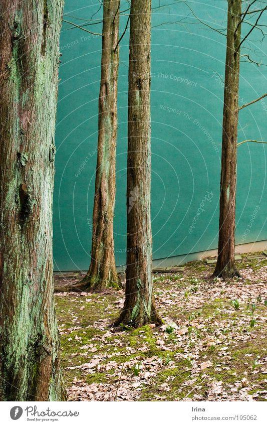 Lieblingsplatz [BO] Natur Pflanze grün schön Baum Blatt ruhig Umwelt Wand natürlich Mauer braun Zufriedenheit hoch Studium Baumstamm