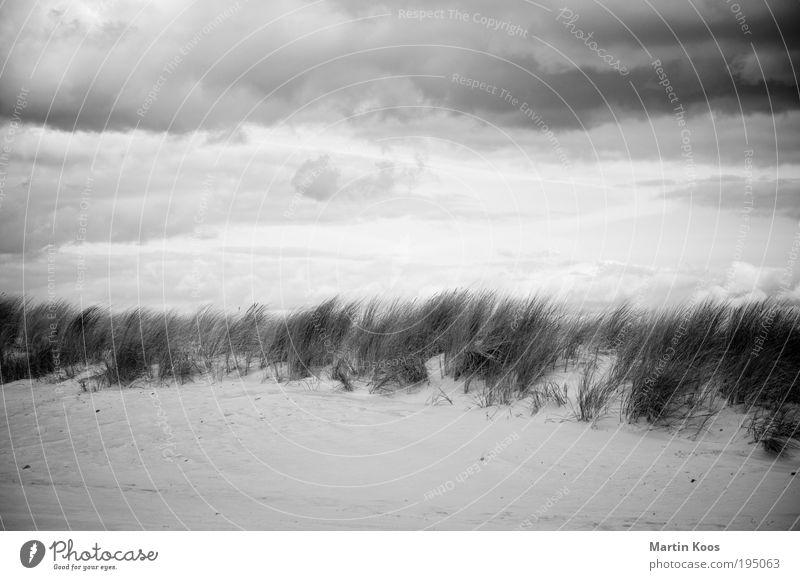 Naturraum D01 Kur Ferien & Urlaub & Reisen Tourismus Strand Meer Insel Umwelt Landschaft Sand Klimawandel Wetter schlechtes Wetter Wind Regen Dürre Pflanze Gras