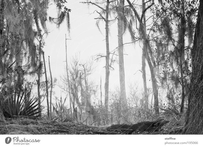 FIRE ON THE BAYOU Umwelt Landschaft Baum Todesangst Wald Waldsterben Waldbrand kahl Ödland Bayou Sumpf Schwarzweißfoto Außenaufnahme