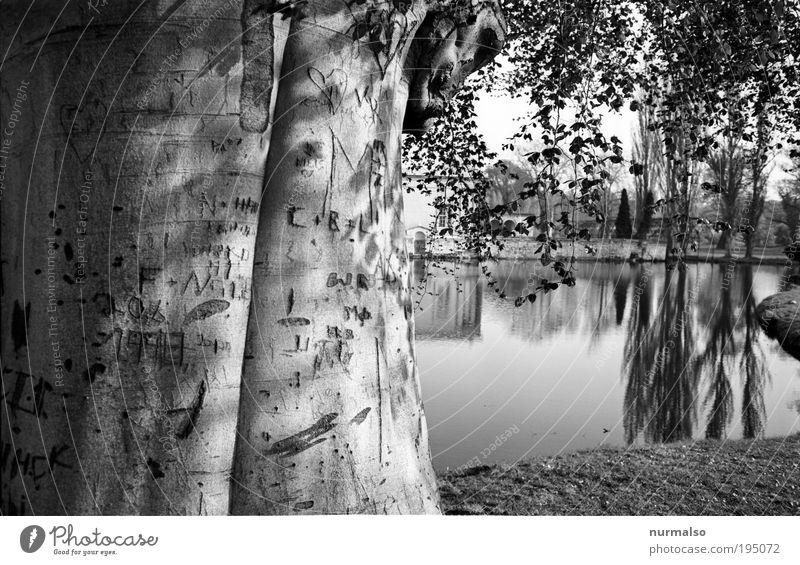 DarkPark I Natur alt Baum Pflanze Tier Wald Umwelt Wiese Landschaft Stimmung Park Kunst Freizeit & Hobby Tourismus ästhetisch Schriftzeichen