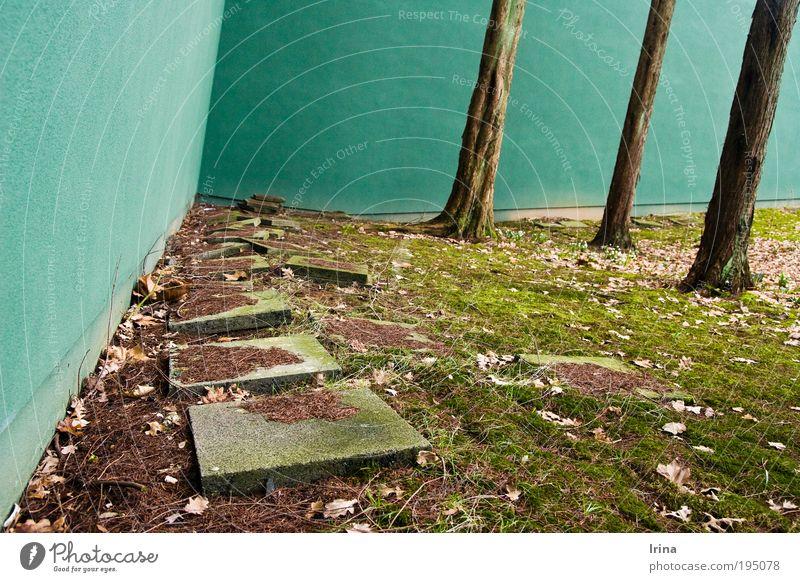 es kippt ... [BO] Baum grün Pflanze Blatt Wand Mauer Linie braun Raum Perspektive Ecke Moos aufsteigen krumm umfallen Bochum