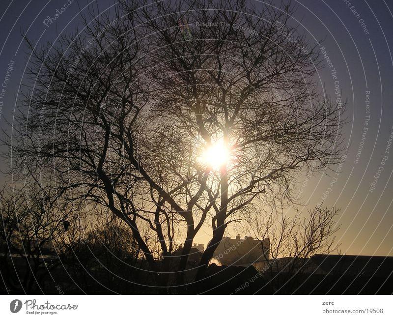 Shining sun Himmel Baum Sonne Treppe