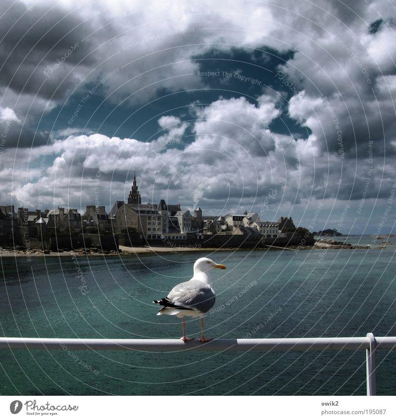 Vogelperspektive Ferien & Urlaub & Reisen Tourismus Ausflug Ferne Freiheit Städtereise Sommerurlaub Umwelt Wasser Himmel Wolken Klima Schönes Wetter Meer