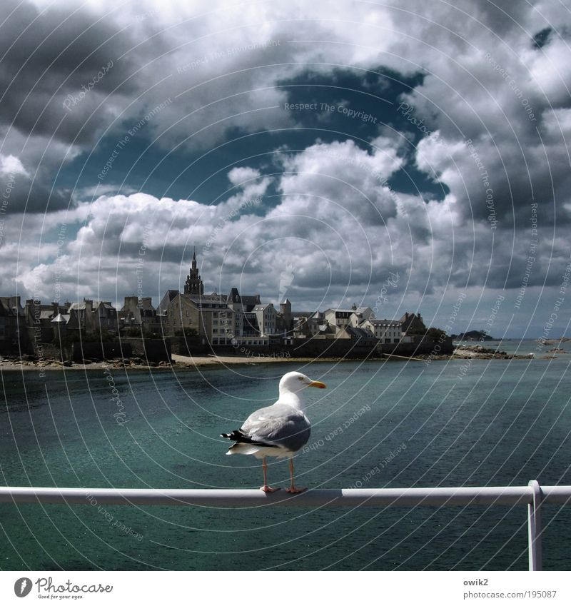 Vogelperspektive Himmel Wasser Ferien & Urlaub & Reisen Meer Wolken Ferne Tier Freiheit Umwelt warten Ausflug Tourismus Klima Europa Wildtier