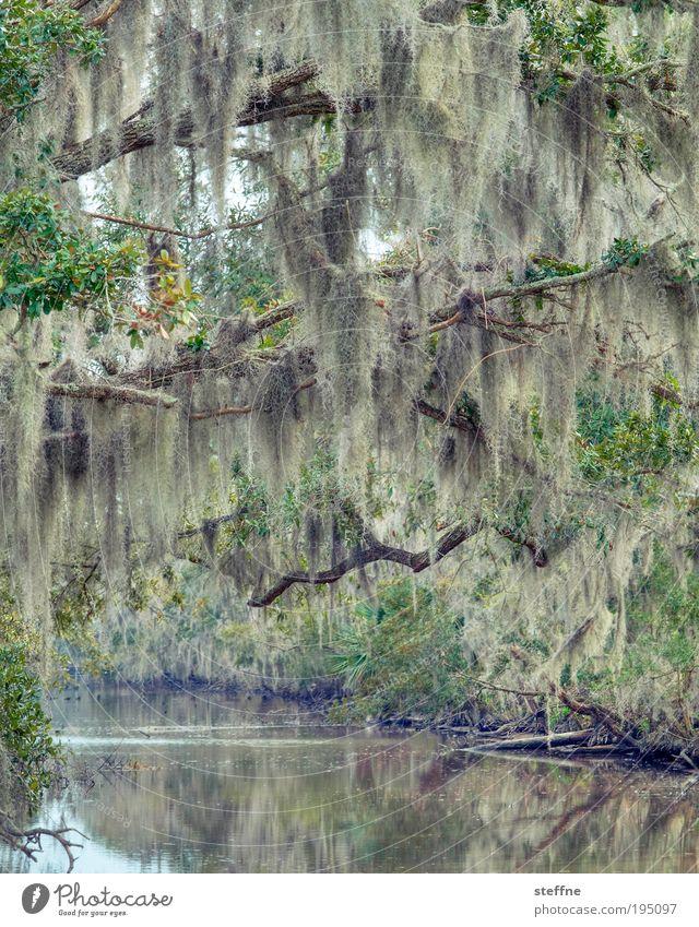 ZZ TOP Gedächtnisbaum Natur Baum Pflanze Winter Landschaft Umwelt Fluss außergewöhnlich Urwald Schönes Wetter Flussufer Sumpf hängend Wald geisterhaft