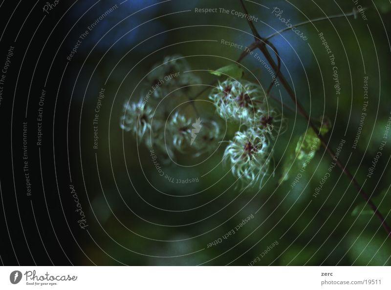 Seltsame Pflanze Natur Baum Blume dunkel Sträucher