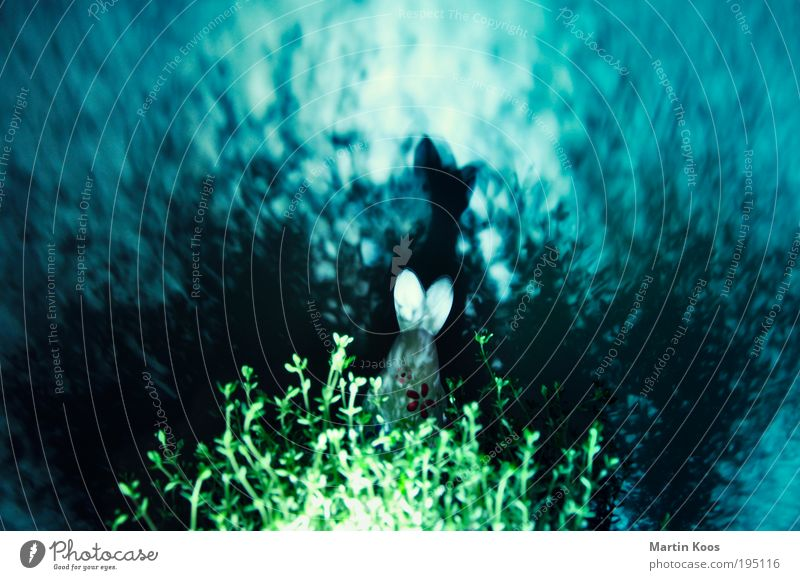 Ostertrip Freude Spielen Frühling träumen Feste & Feiern Tanzen Geschwindigkeit Aktion Ohr Niveau Ostern leuchten geheimnisvoll Kräuter & Gewürze gruselig Club