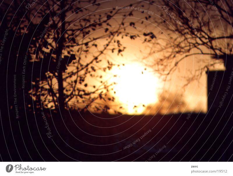 Abgang Sonnenuntergang Baum Tiefenschärfe Abend Unschärfe Ast