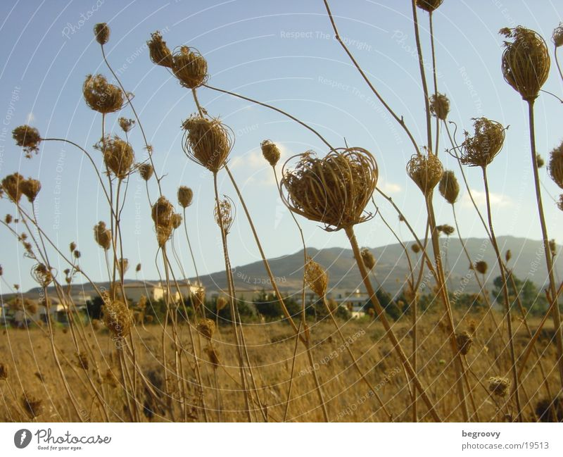 Blumen auf Kos Himmel Sommer Blüte Stimmung Feld Küste Griechenland quer Kos