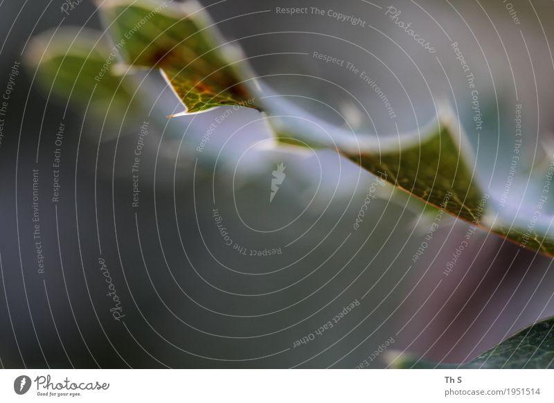 Blatt Natur Pflanze grün weiß rot ruhig Herbst Frühling natürlich Bewegung Design elegant frisch ästhetisch authentisch