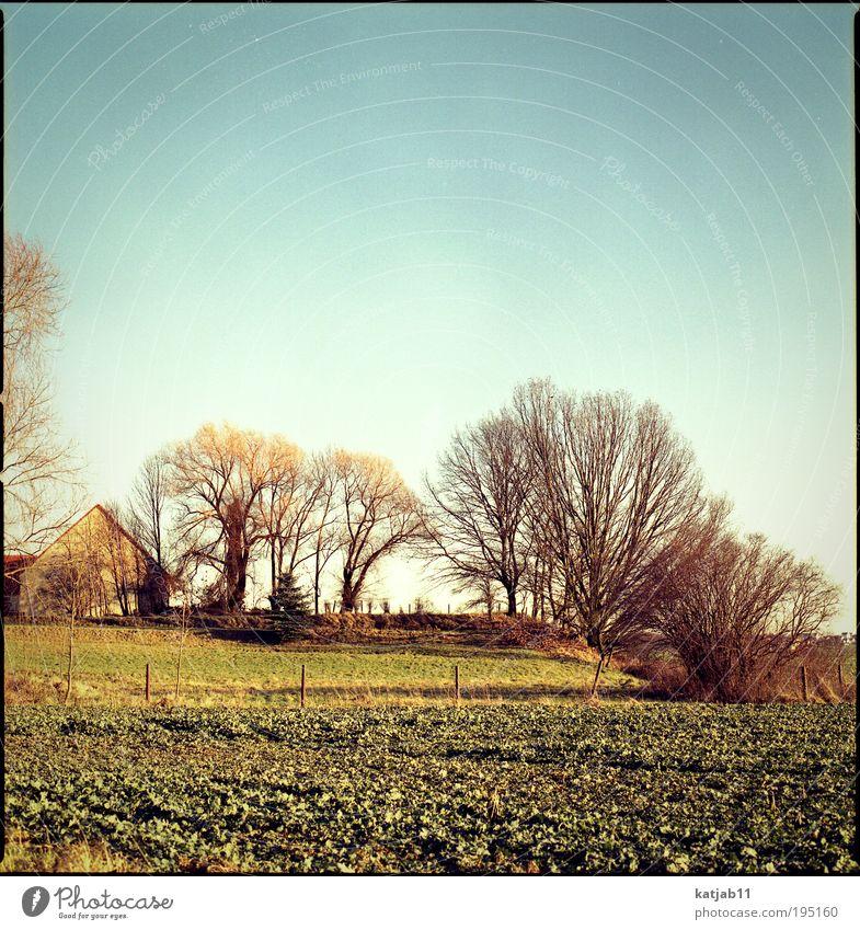Das Haus. Natur alt Baum Pflanze Winter Haus Einsamkeit Herbst Wiese Garten Landschaft Feld Umwelt Häusliches Leben Dorf Einfamilienhaus
