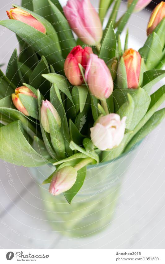 Tulpenstrauß II Pflanze hell Blume Blumenstrauß Frühling Freundlichkeit Innenaufnahme Geschenk Liebe Freundschaft Muttertag schenken rosa orange rot grün Natur