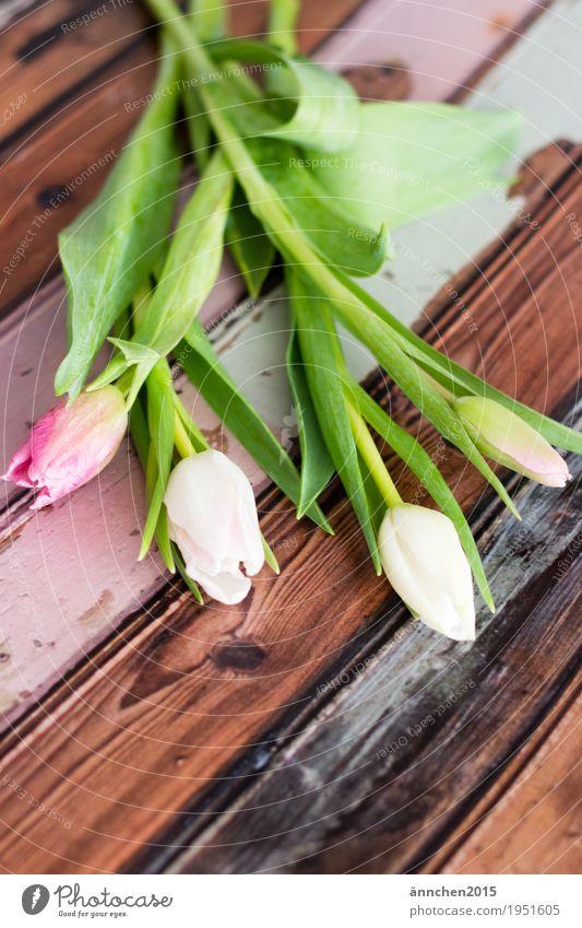 Blumenliebe Pflanze hell Tulpe Blumenstrauß Frühling Freundlichkeit Innenaufnahme Geschenk Liebe Freundschaft Muttertag schenken rosa orange rot grün Natur