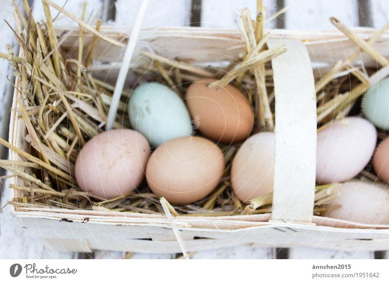 gefundene Eier Ostern Haushuhn Korb finden Suche Gesunde Ernährung Speise Essen Bioprodukte freilaufend Landleben Stroh
