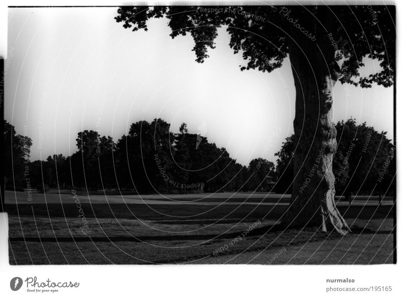 DarkPark II Natur Baum Freude dunkel träumen Park Landschaft Kunst gehen Umwelt Ausflug ästhetisch Wachstum Rasen Tourismus Freizeit & Hobby