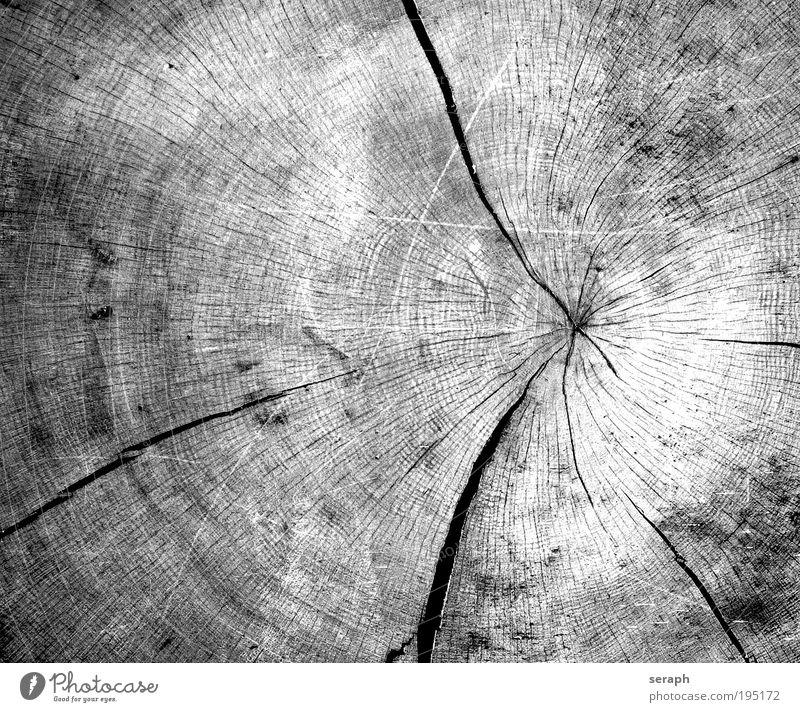 Zeit Natur Leben Holz Kreis Wahrzeichen Symbolismus kreisrund Brennholz Symbole & Metaphern Radius Jahresringe