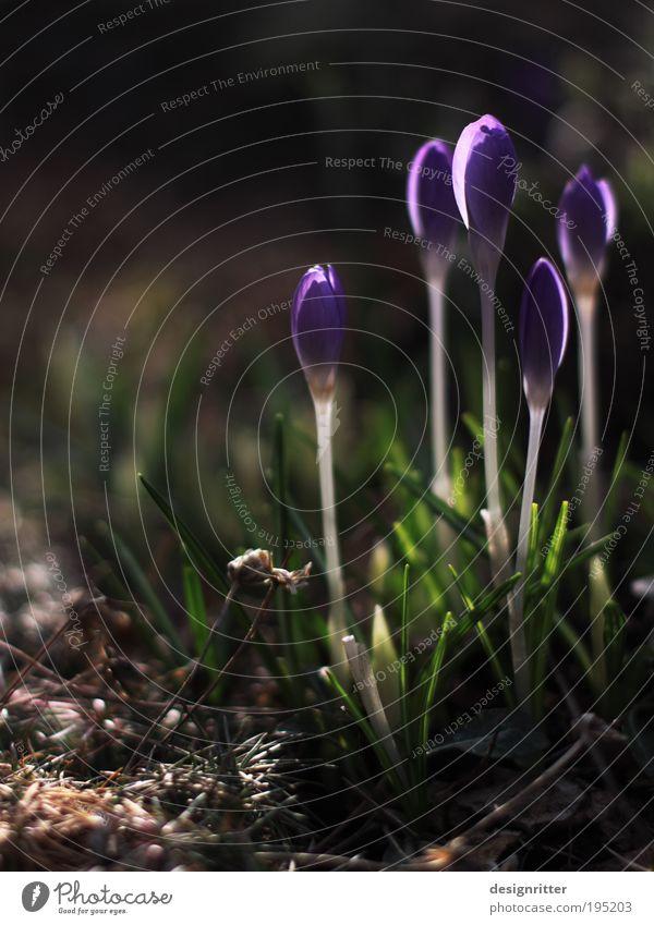 Auf die Plätze – fertig – … Pflanze schön Blume Freude dunkel Wärme Frühling Glück hell Wachstum Kraft Erfolg Lebensfreude Blühend Warmherzigkeit Hoffnung