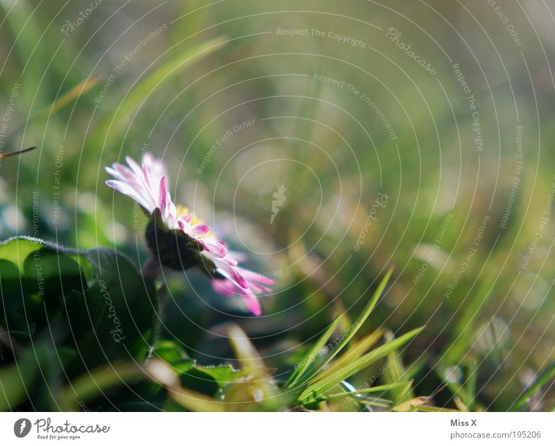 Frühling Natur schön Sonne Blume Pflanze Sommer Blatt Wiese Blüte Gras Frühling Glück Park Zufriedenheit Stimmung