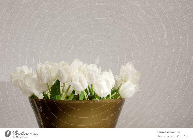 Frühling 2 weiß grün Pflanze grau Blumenstrauß Tulpe Vase Blumenvase
