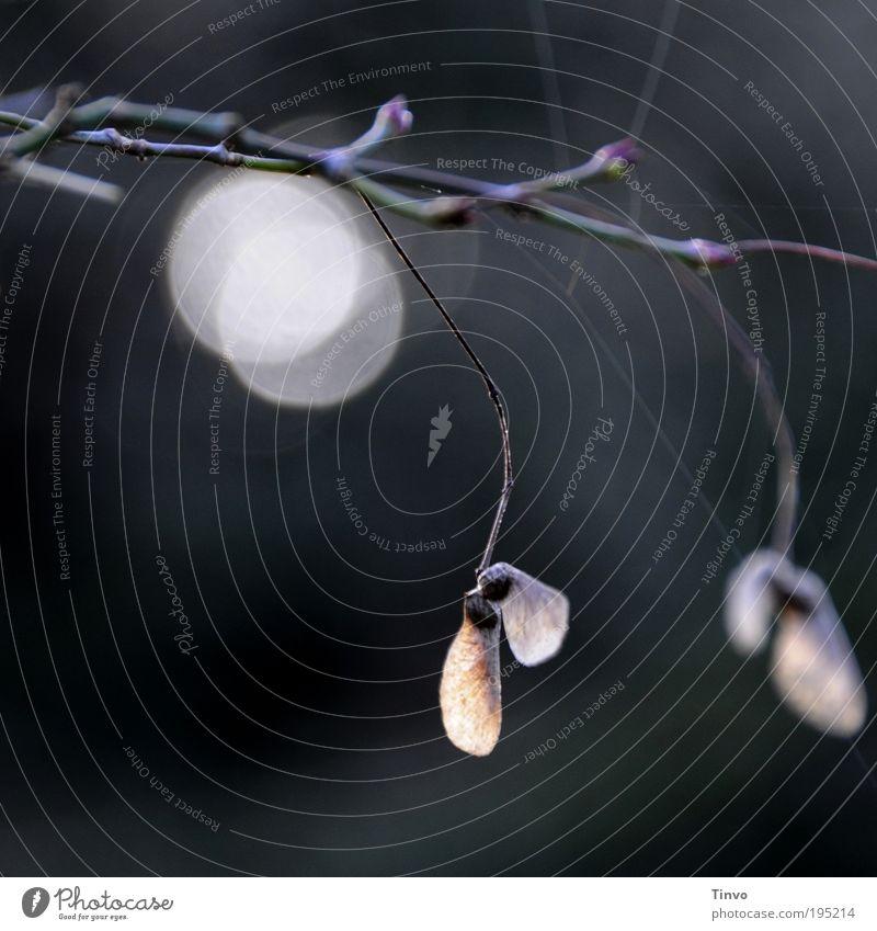 Pärchen Natur ruhig Blatt dunkel Herbst Paar Stimmung Zusammensein paarweise nah Wandel & Veränderung Leidenschaft Verbindung Partnerschaft Verliebtheit