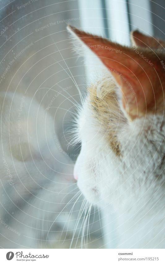 Inspector Gadget Natur weiß schön ruhig Tier Einsamkeit Ferne Erholung Katze Denken träumen Zufriedenheit elegant authentisch Zukunft einzigartig