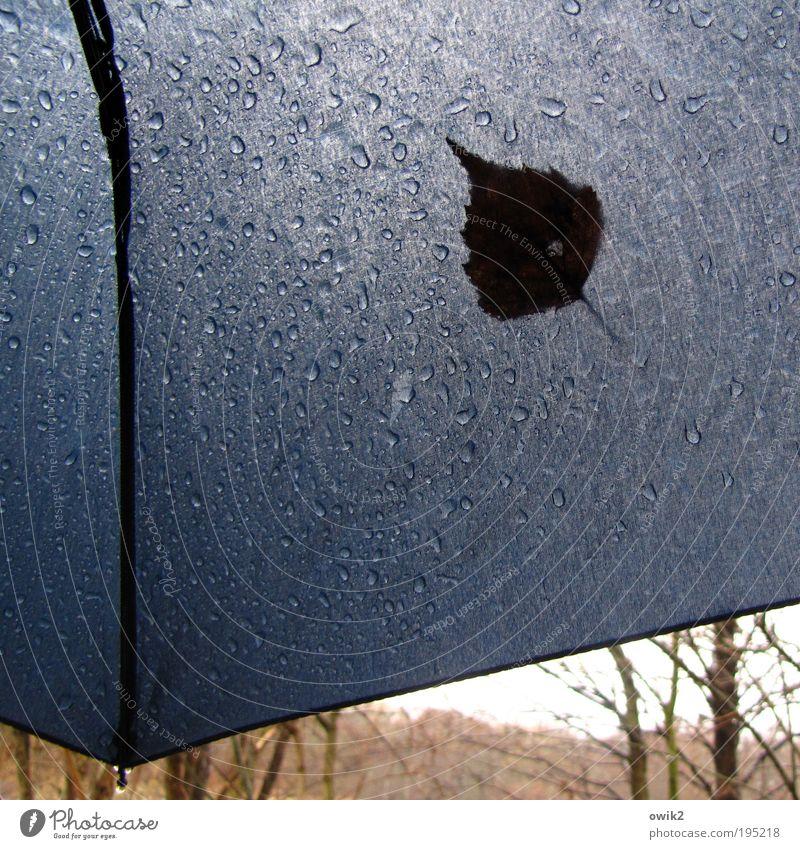 Regentag Spaziergang Umwelt Natur Pflanze Wasser Wassertropfen Himmel Horizont Klima schlechtes Wetter Blatt nah blau Gelassenheit geduldig ruhig