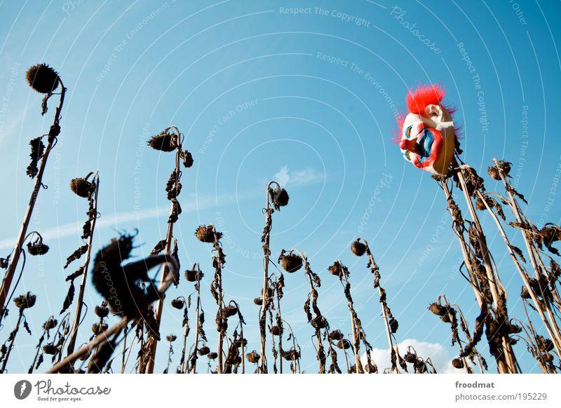 schluss mit lustig Einsamkeit Erholung Herbst träumen Kunst lustig Wind Wandel & Veränderung Klima Maske Vergänglichkeit einzigartig geheimnisvoll Verfall Vergangenheit skurril