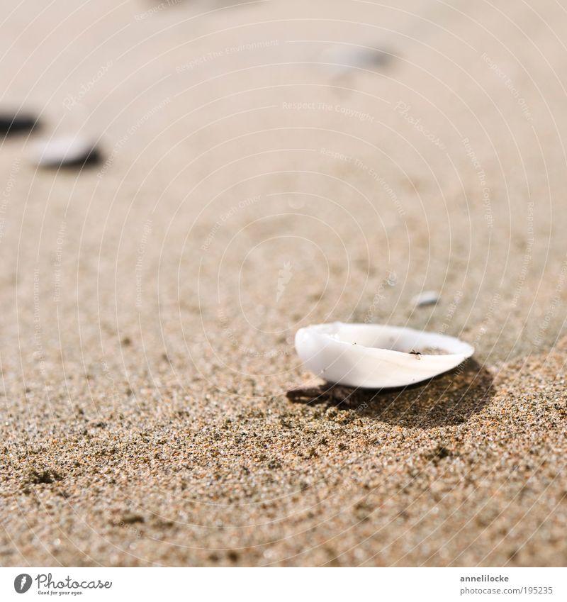 gestrandet Natur Sommer Strand Ferien & Urlaub & Reisen Meer Erholung Umwelt Sand Küste Freizeit & Hobby Ausflug Insel liegen Tourismus Suche Lifestyle