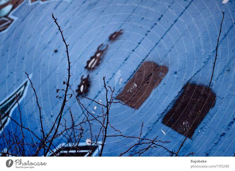 urbane Kunst blau ruhig schwarz Einsamkeit Tier kalt Wand Mauer Graffiti Beton verrückt Perspektive ästhetisch Sträucher nah
