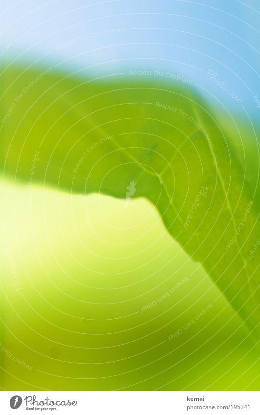 Frühlingssonne für alle Natur blau grün schön Pflanze Blatt Frühling Ernährung leuchten ästhetisch Schönes Wetter genießen Kräuter & Gewürze Erfrischung Grünpflanze Blattadern