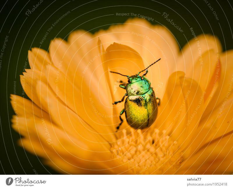 golden Natur Pflanze Sommer schön Blume Tier Umwelt gelb Blüte Garten Gesundheitswesen glänzend ästhetisch Blühend einzigartig