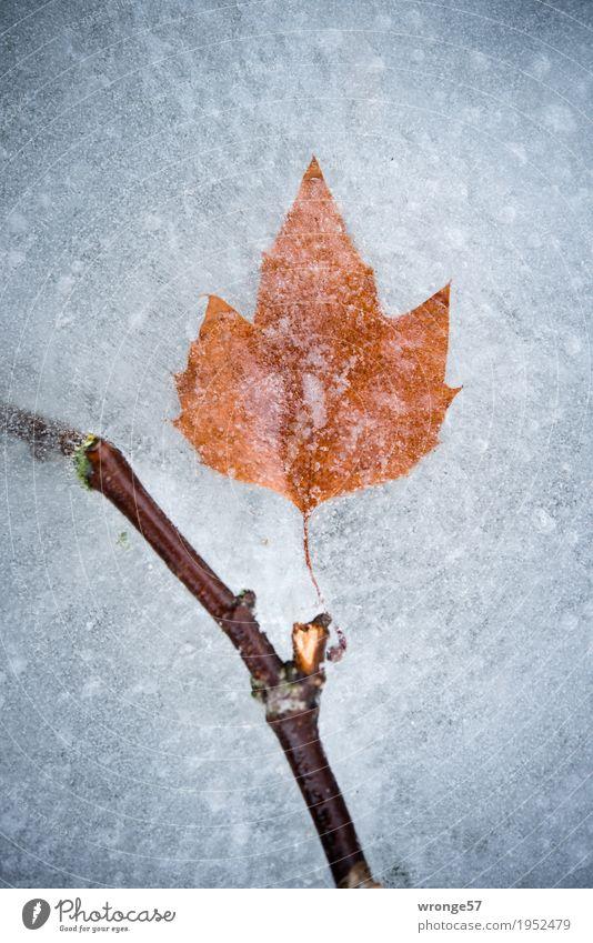 Eiszeit | Zeitkapsel II Natur Winter Blatt Teich See kalt braun grau weiß Frost Zweige u. Äste Hochformat Zentralperspektive Farbfoto Gedeckte Farben
