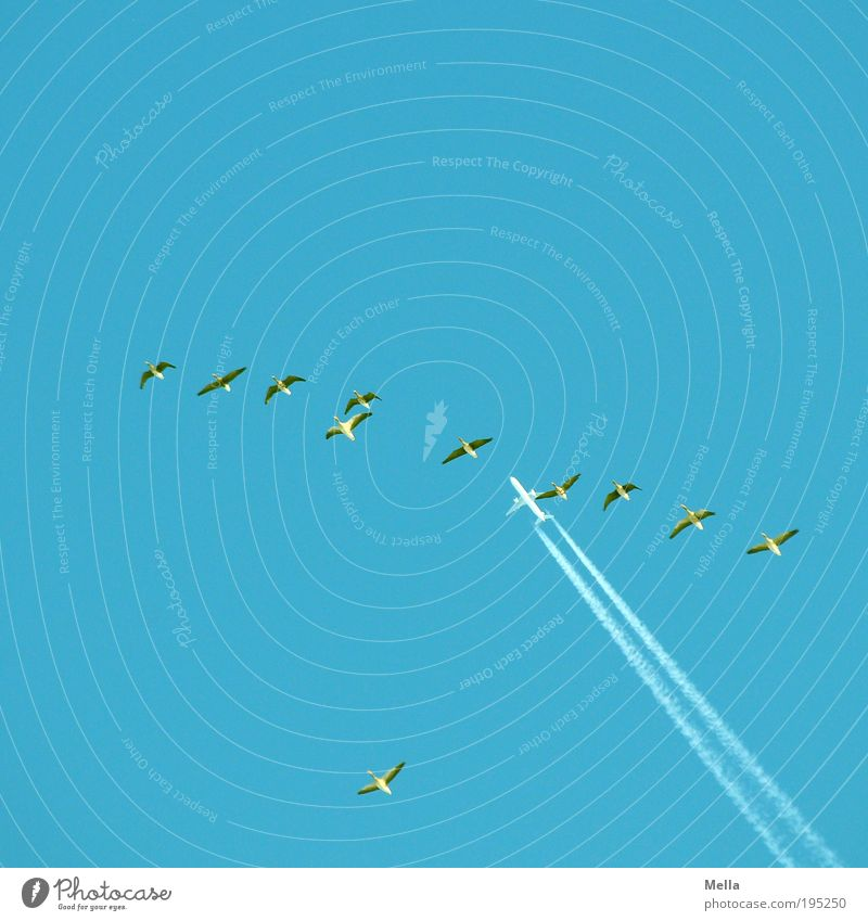 Mitfluggemeinschaft Ferien & Urlaub & Reisen Ferne Freiheit Umwelt Natur Tier Luft Wolkenloser Himmel Luftverkehr Flugzeug Passagierflugzeug Wildtier Vogel