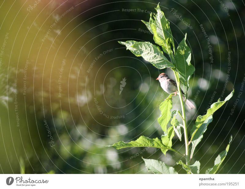 Natur grün Pflanze Blatt Tier Wiese Freiheit braun Vogel Feld Umwelt gold Sträucher beobachten wild natürlich