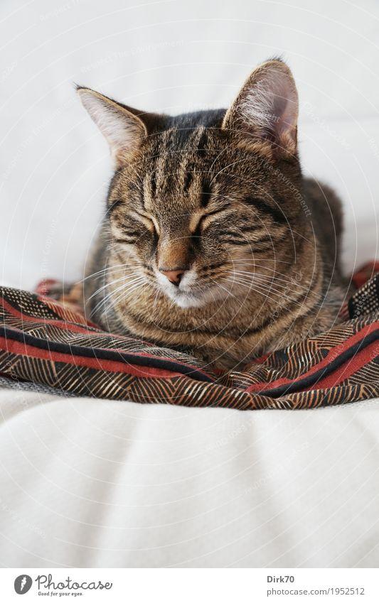 Schläfrig auf dem Sessel I Katze Erholung Tier ruhig Innenarchitektur natürlich Wohnung Häusliches Leben träumen Zufriedenheit liegen Idylle niedlich Coolness