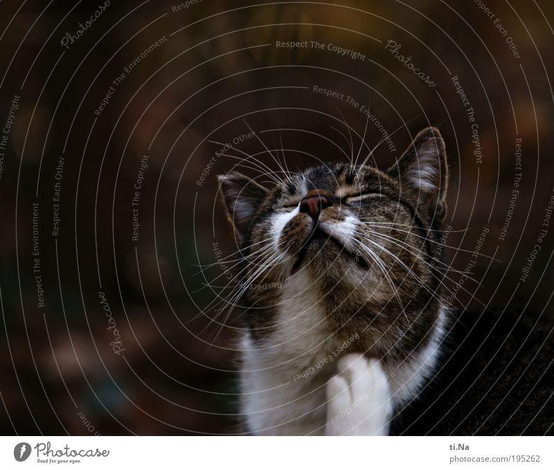 ** 150 ** Umwelt Natur Landschaft Pflanze Tier Haustier Wildtier Katze Tiergesicht Fell Krallen Pfote Arbeit & Erwerbstätigkeit genießen frech natürlich braun