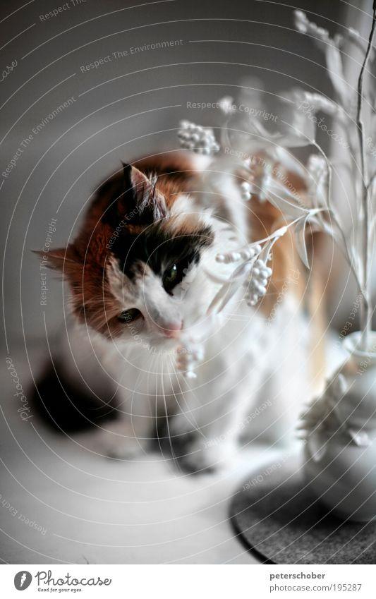 smell schön weiß Blume rot ruhig Tier Katze Wohnung Tisch Dekoration & Verzierung Fell Idylle Neugier Duft Geruch Sinnesorgane