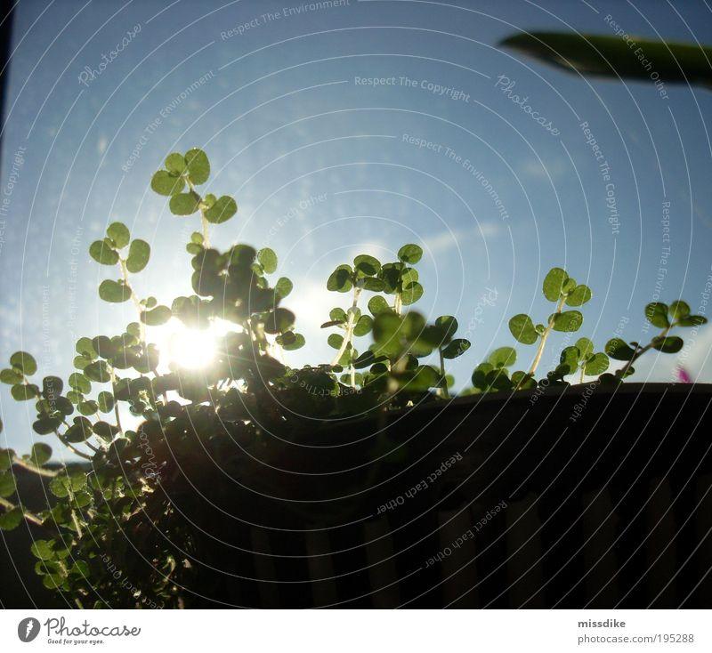 bubi Natur weiß grün blau Pflanze Blatt Frühling hell Gesundheit Umwelt Energie Wachstum Häusliches Leben Lebensfreude Idylle leuchten