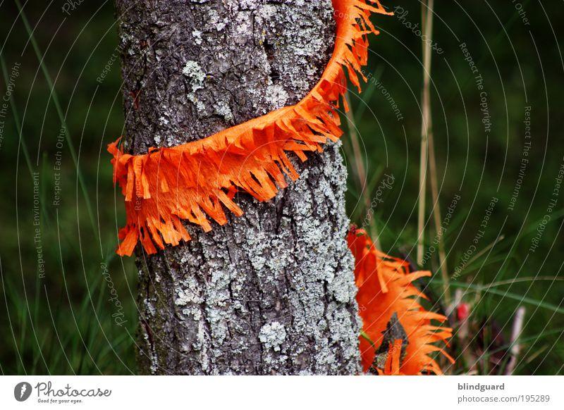 Maibaum Light Feste & Feiern Karneval Natur Pflanze Baum Gras Grünpflanze Wildpflanze Garten Holz alt gold grau grün Papier Girlande Schmuck Kindergeburtstag