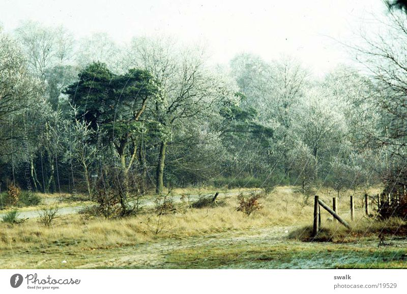 Frost Winter Wald Berge u. Gebirge