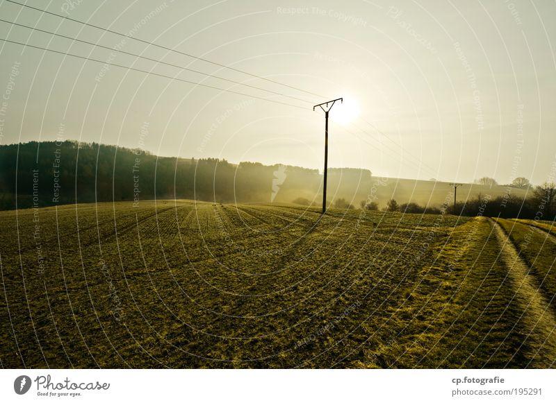 ein neuer Tag Natur schön Himmel Baum Sonne Pflanze Wald Wiese Frühling Glück Wärme Landschaft Zufriedenheit Feld Nebel Umwelt