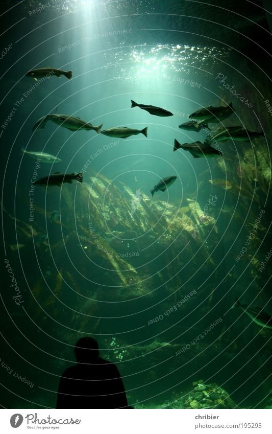 Deep Blue -121- Mensch Natur Wasser grün ruhig Tier Erholung nass Schwimmen & Baden außergewöhnlich tauchen Neugier beobachten fantastisch Riff genießen